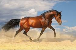 Onderlegger Kangaro 44x68cm paard